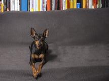 可爱和糖果狗 免版税库存图片