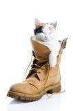 可爱小猫休眠 免版税库存图片
