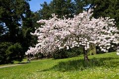 可爱春天开花 库存图片