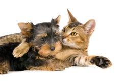 可爱猫的狗 库存照片
