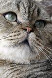 可爱猫的表面 库存图片
