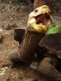 可爱的乌龟 免版税库存照片