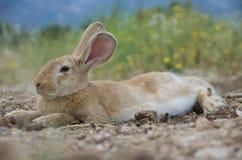 可爱的兔宝宝兔子 库存照片