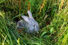 可爱的兔宝宝 免版税图库摄影