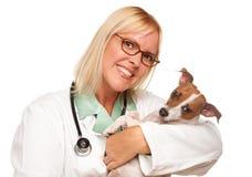 可爱的医生女性小狗兽医 库存照片