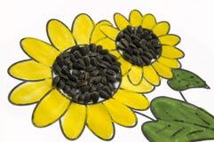可爱的向日葵的手工制造图片 绘与黄色和绿色树胶水彩画颜料和被胶合的黑种子 在白色背景的艺术 免版税图库摄影