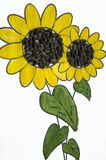 可爱的向日葵的手工制造图片 绘与黄色和绿色树胶水彩画颜料和被胶合的黑种子 在白色背景的艺术 免版税库存图片