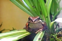 可爱的和平的雨蛙在植物中 库存照片
