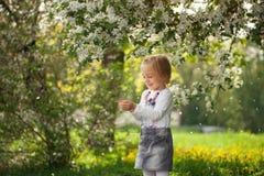 可爱的女孩在一棵开花的苹果树在晴朗的春天 库存照片
