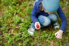 可爱的女孩采摘狐桨果在森林里 免版税库存图片