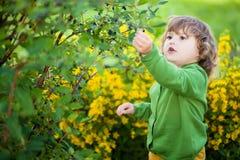 可爱的小女孩吃从灌木的忍冬属植物 免版税库存照片