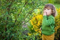 可爱的小女孩吃从灌木的莓果 免版税图库摄影