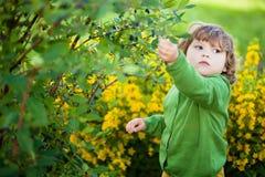 可爱的小女孩吃从灌木的莓果 免版税库存照片