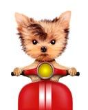 可爱的小狗坐摩托车 免版税图库摄影
