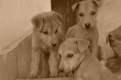 可爱的小狗射击在一个不同的场面方式下 免版税库存照片