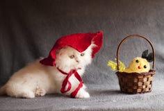 可爱的小猫 库存图片