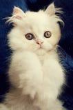可爱的小猫 库存照片