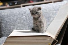 可爱的小猫 免版税图库摄影