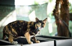 可爱的小猫 图库摄影