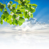 可爱的开花的树 库存图片