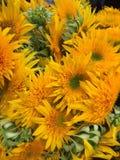 可爱的明亮和晴朗的花 免版税库存图片