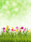 可爱的春天背景 免版税库存照片