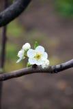 可爱的春天 图库摄影