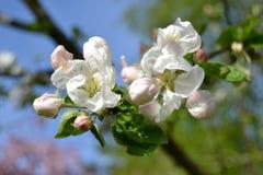 可爱的春天 库存照片