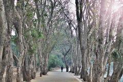 可爱的树路 免版税库存照片