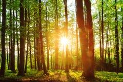 可爱的森林日落 免版税库存图片