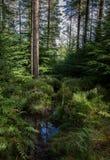 可爱的森林视图 免版税库存图片
