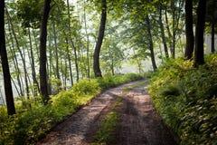 可爱的森林路径在清早阳光下 免版税库存图片