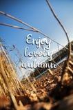 可爱的欧洲秋天风景卡片,好的五颜六色的风景 免版税库存照片
