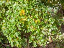 可爱的流动的绿色和黄色叶子紧密 免版税库存图片