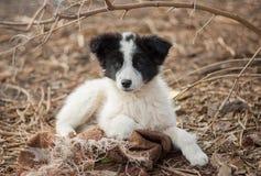 可爱的混杂的品种小狗画象 免版税图库摄影