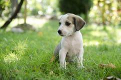 可爱的混杂的品种小狗 库存图片