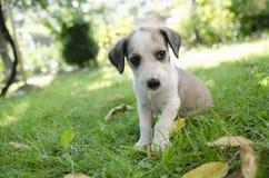 可爱的混杂的品种小狗 免版税库存照片