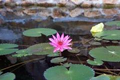 可爱的热带水花 免版税库存图片