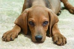 可爱的狗一点 免版税库存图片
