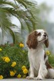 可爱的狗 图库摄影