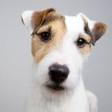可爱的狗 免版税库存图片