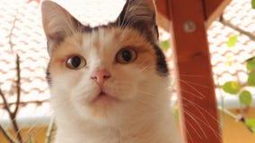 可爱的猫面孔 免版税库存图片