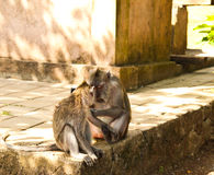 可爱的猴子 库存照片