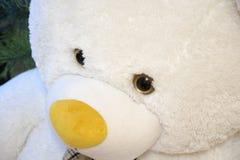 可爱的玩具熊特写镜头,蓬松大玩具 免版税库存图片