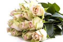 可爱的玫瑰 免版税库存照片