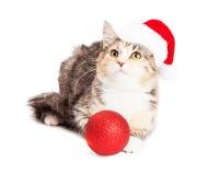 可爱的白棉布圣诞节小猫 库存照片
