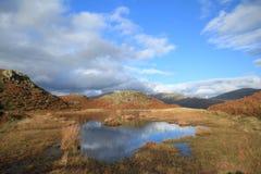 可爱的百合Tarn.Loughrigg落, Cumbria,英国。 图库摄影