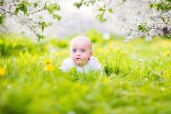 可爱的矮小的男婴在开花的苹果庭院里 图库摄影