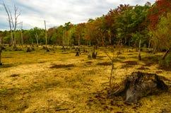 可爱的秋天秀丽覆盖物叶子槭树裸体纵向妇女 库存图片