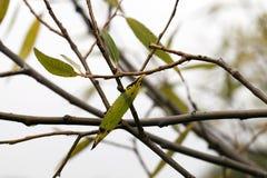 可爱的秋天秀丽覆盖物叶子槭树裸体纵向妇女 库存照片